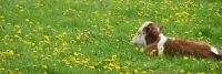 Weiterlesen: Eine Blume, lieber Ferdinand!