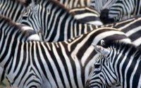 Weiterlesen: Jö schau, ein Zebra!