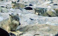 Weiterlesen: Schaf im Wolfspelz
