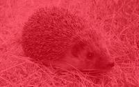 Weiterlesen: Die roten Igel